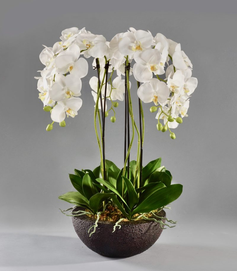 White orchids in black planter