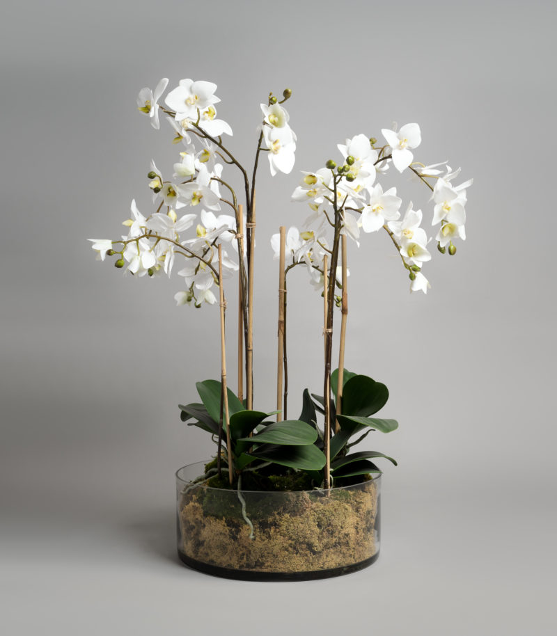 White orchids in a glass dish