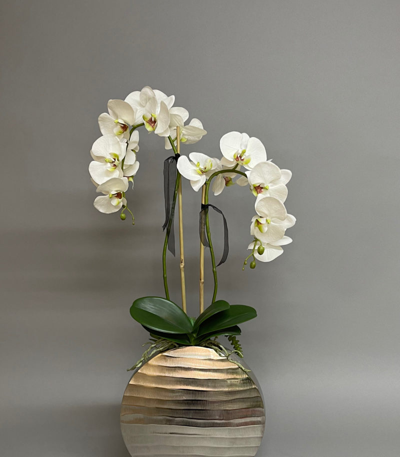 white orchids in silver vase