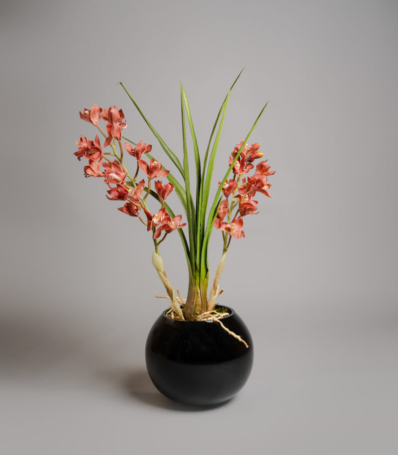 Red cymbidium orchids in vase
