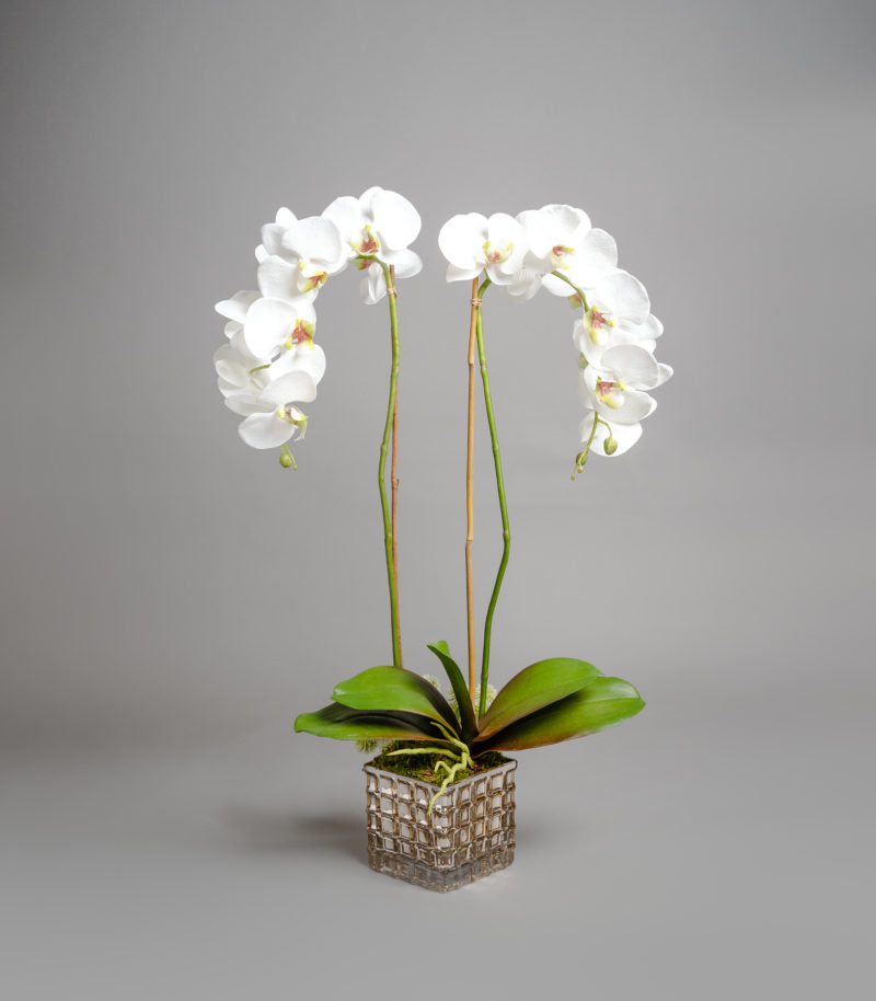 White orcid plants in planter