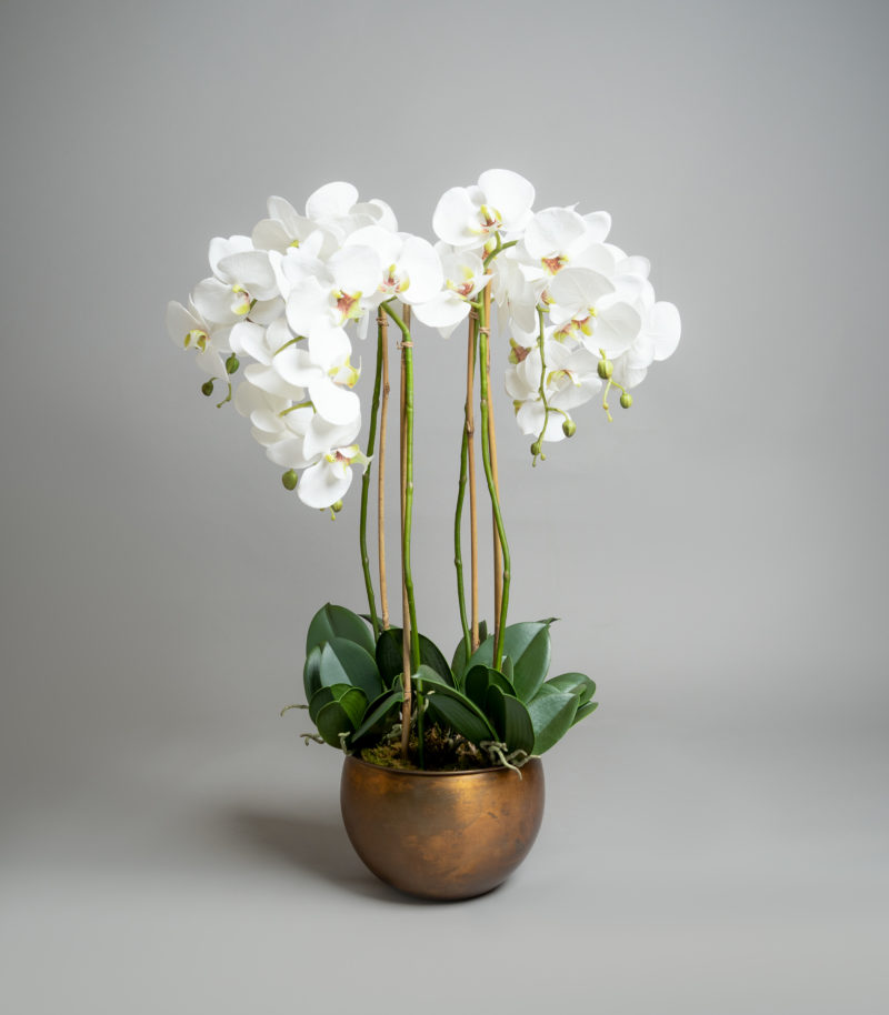 White orchids in bronze pot