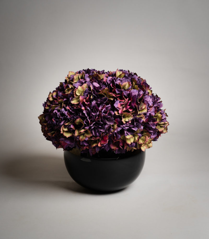 Purple hydrangeas in black vase