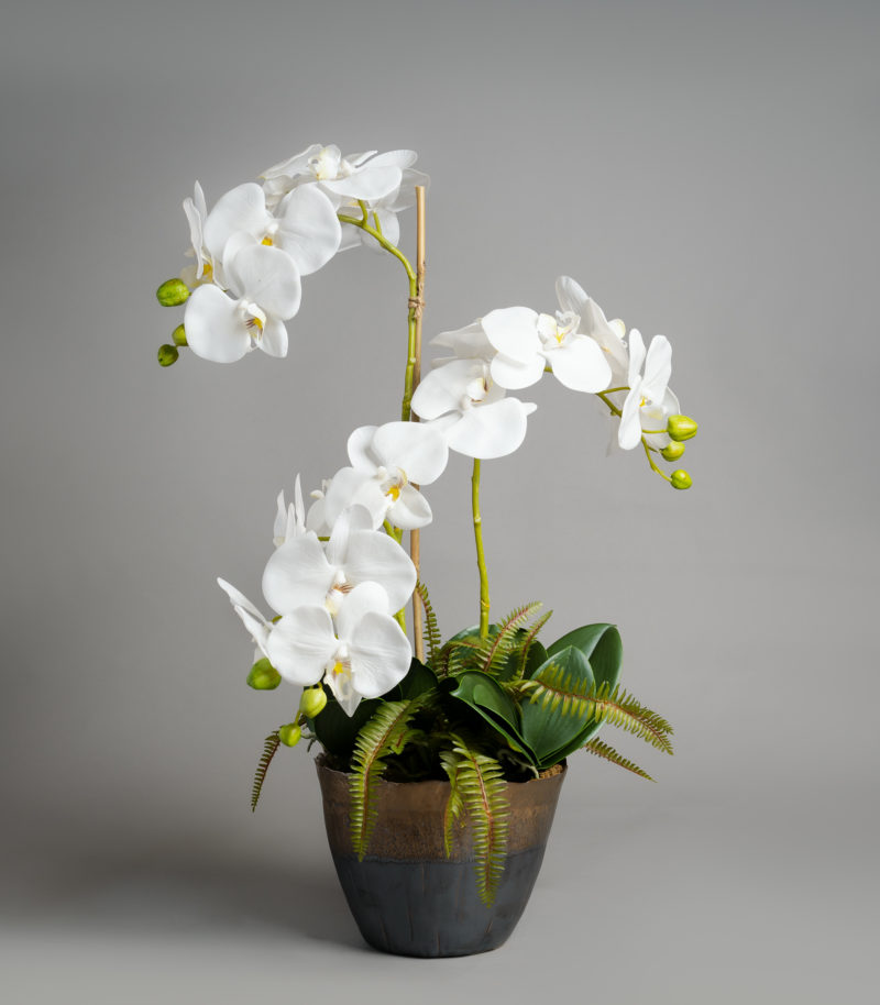 Artificial orchid plants in pot