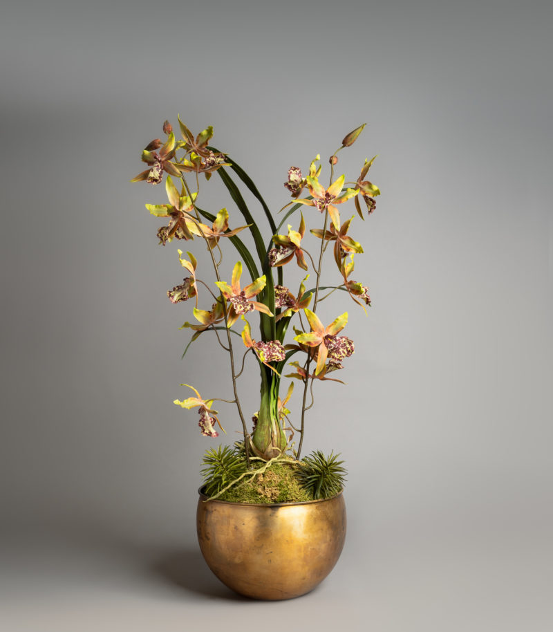 Indidium orchid planter