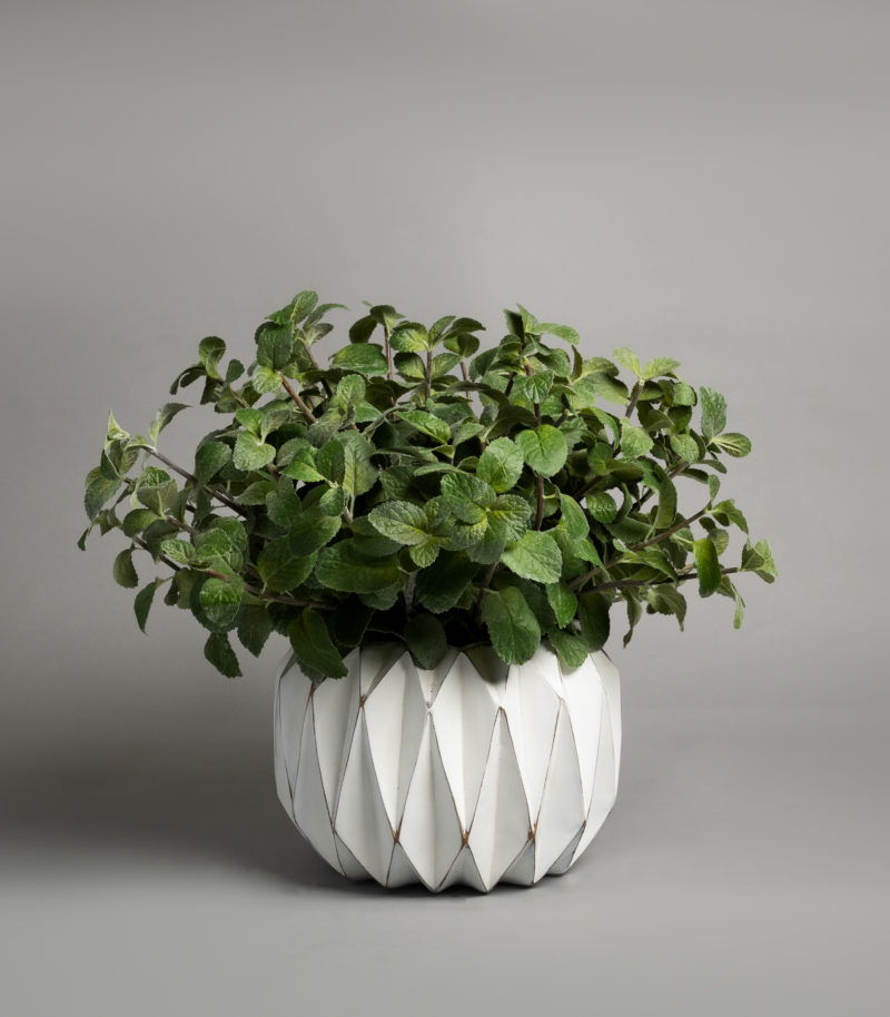 Mint in a planter