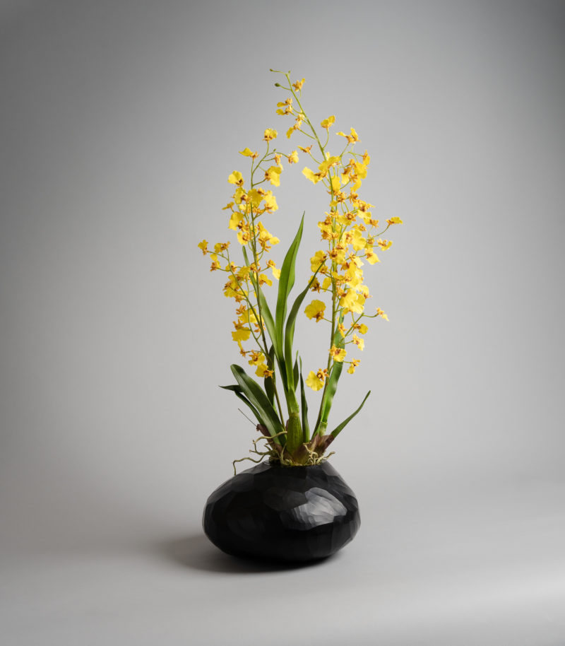Yellow orchids plants inpot