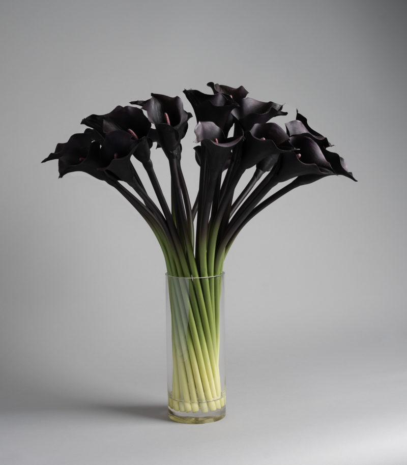 Purple calla lily in vase