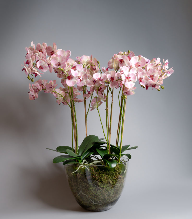 Pink orchids in glass vase