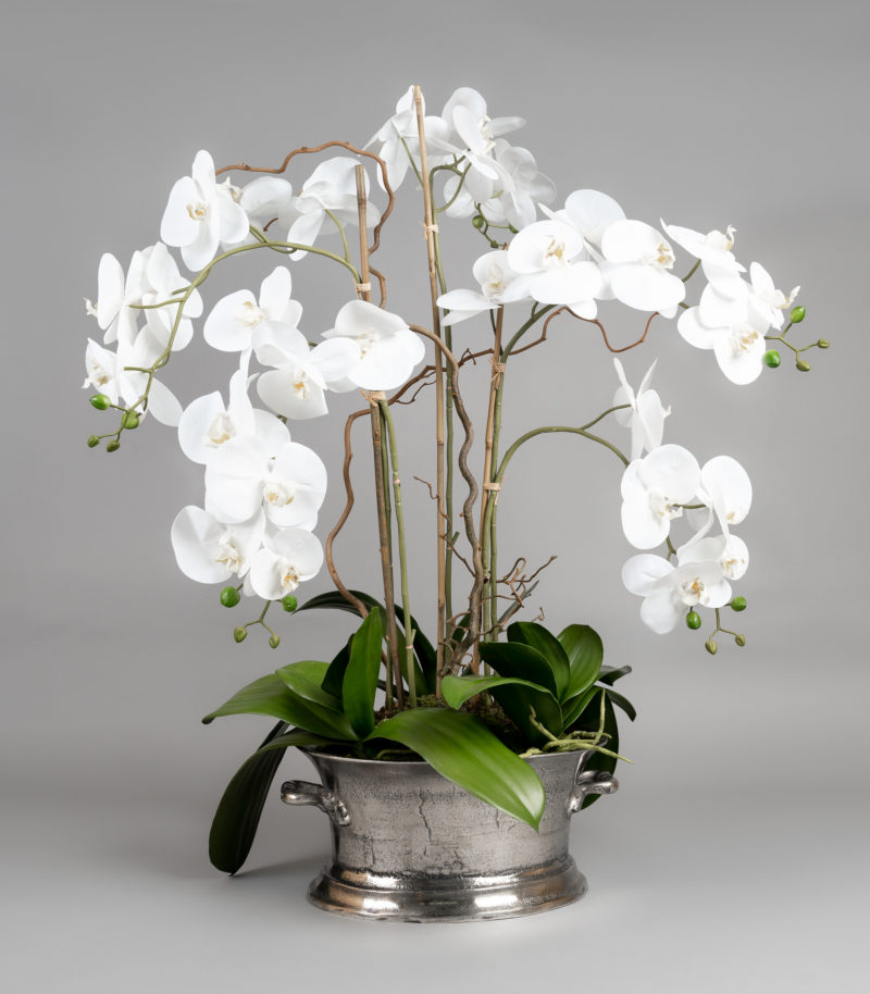 Orchids in silver champagne bucket