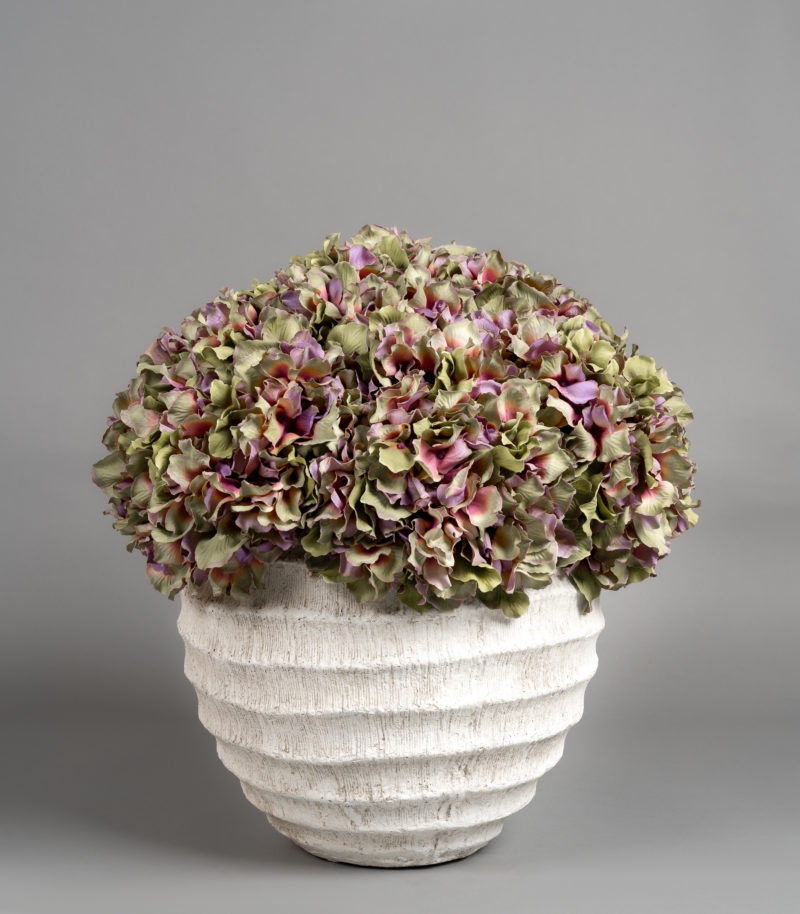 Hydrangeas in stone planter
