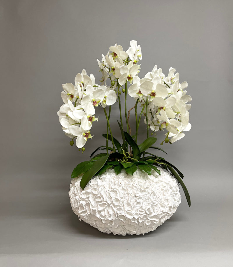 White orchids in white vase
