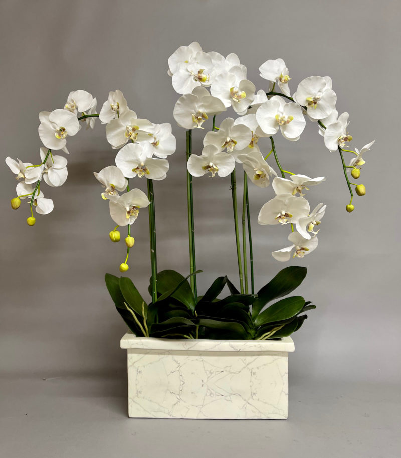 White orchids in marble vase