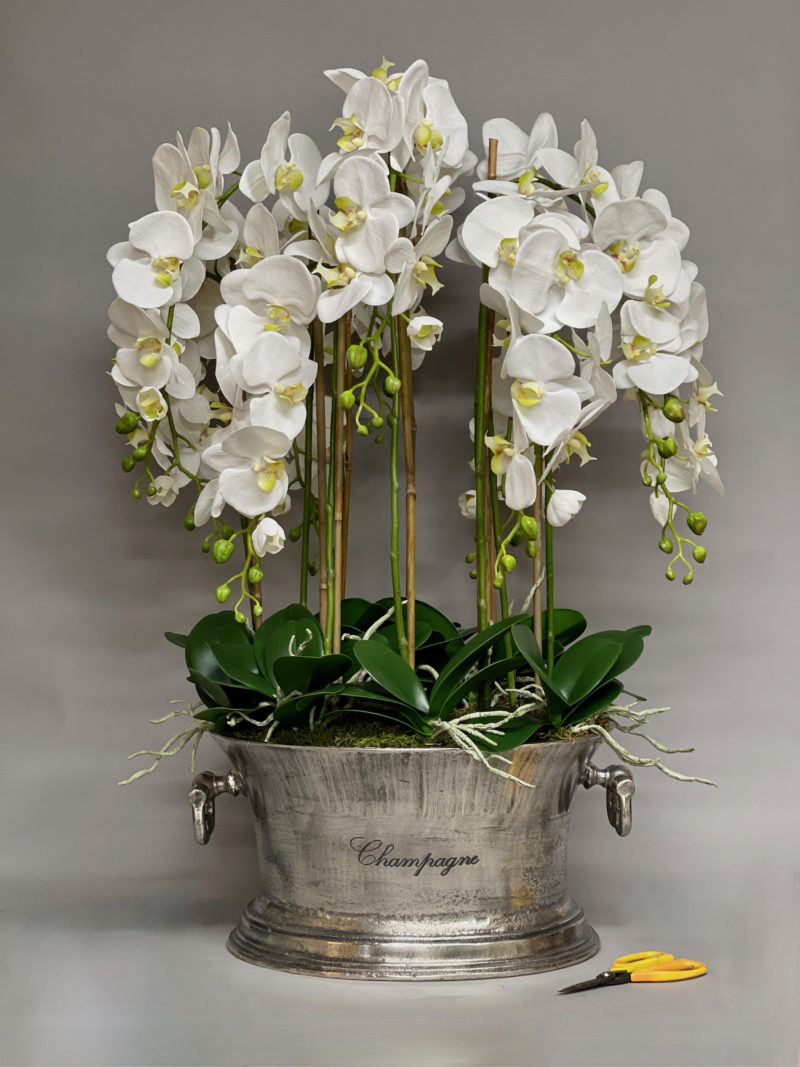 Orchids in champagne cooler