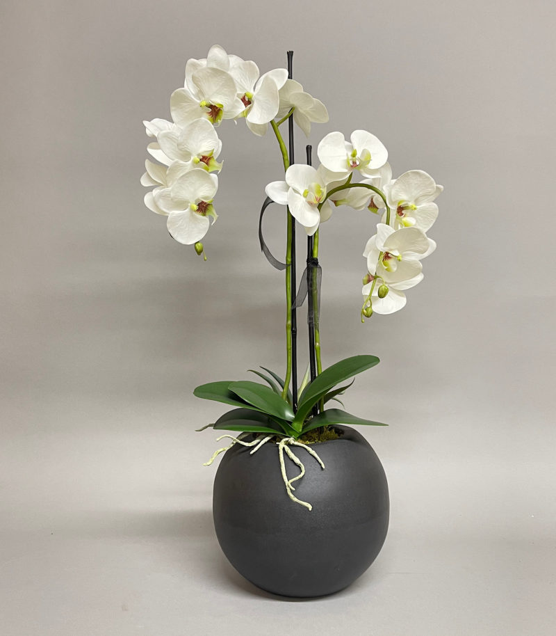 White orchids in black vase
