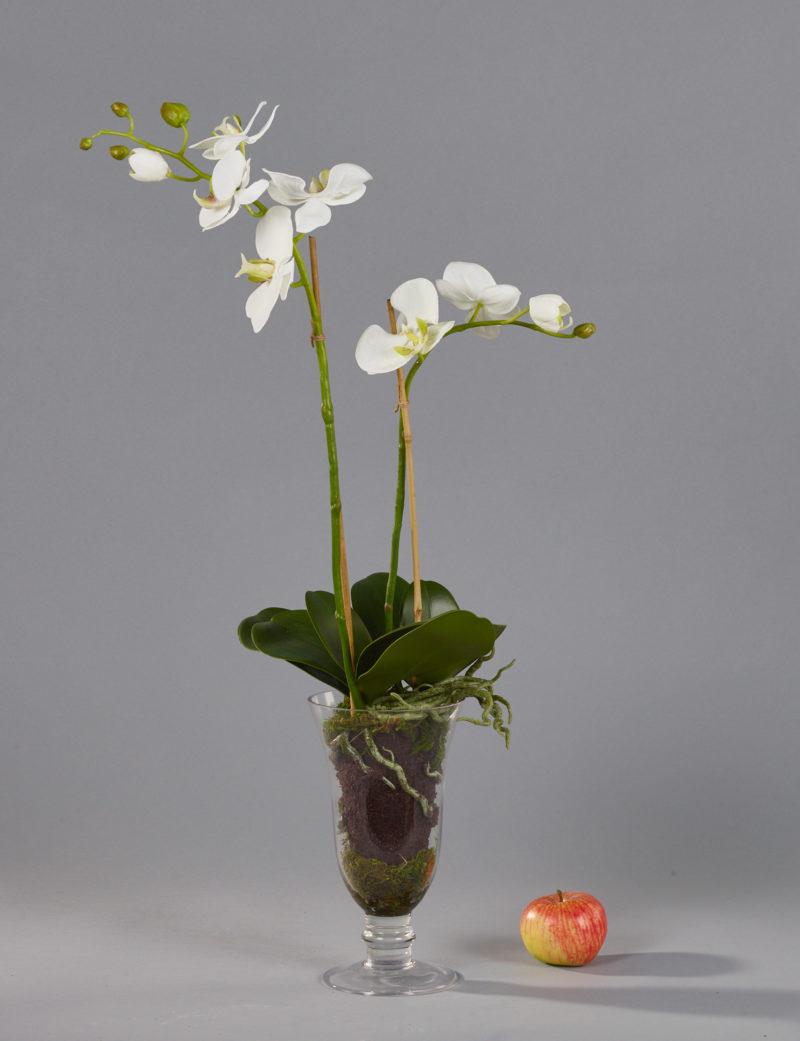 White orchids in glass goblet vase