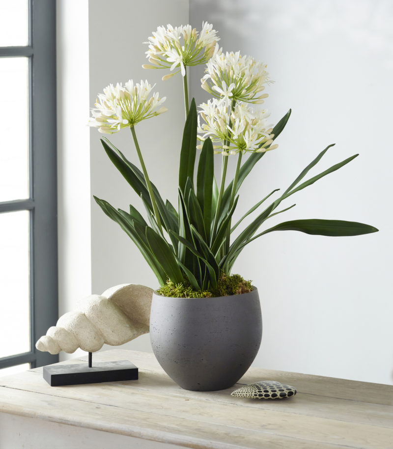 Artificial agapanthus in planter