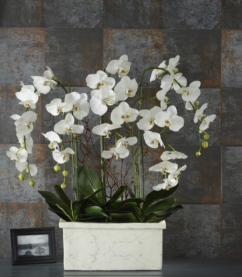 White orchids in marble planter